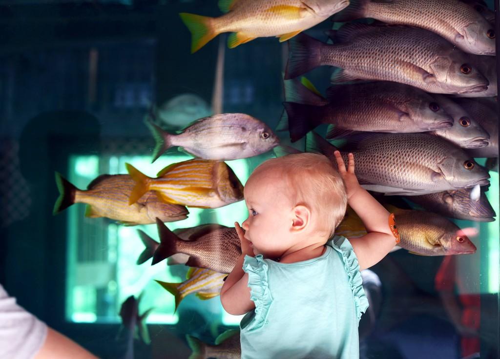 gumbo-limbo-rybki