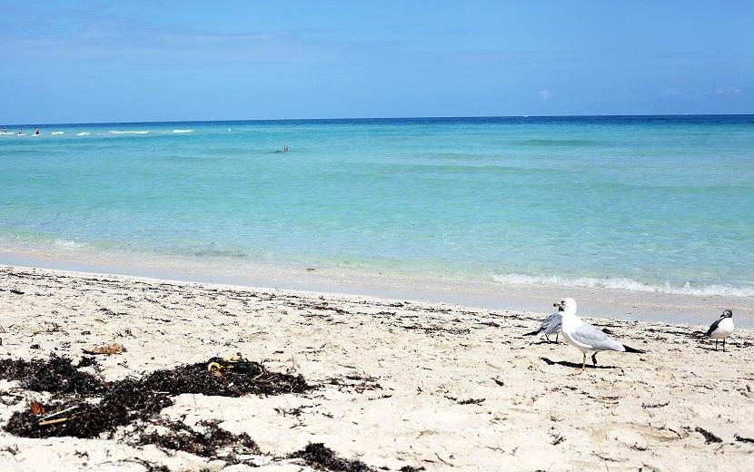 mini-plaża-miami