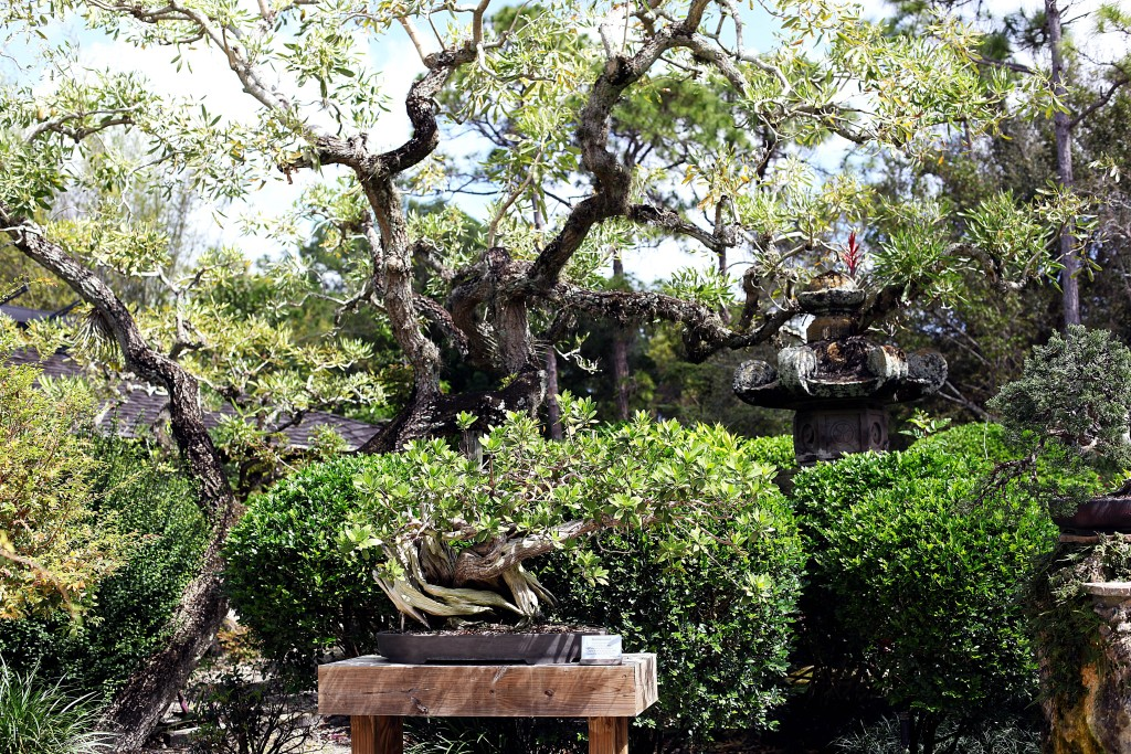 morikami-bonsai-trees