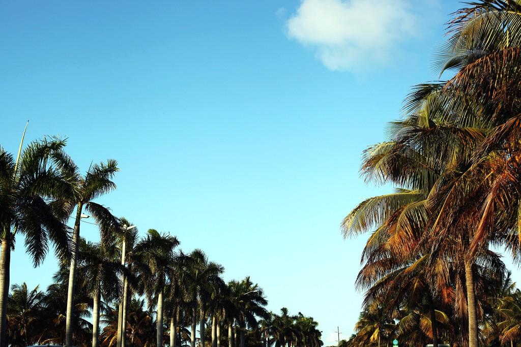 palmy-miami-beach