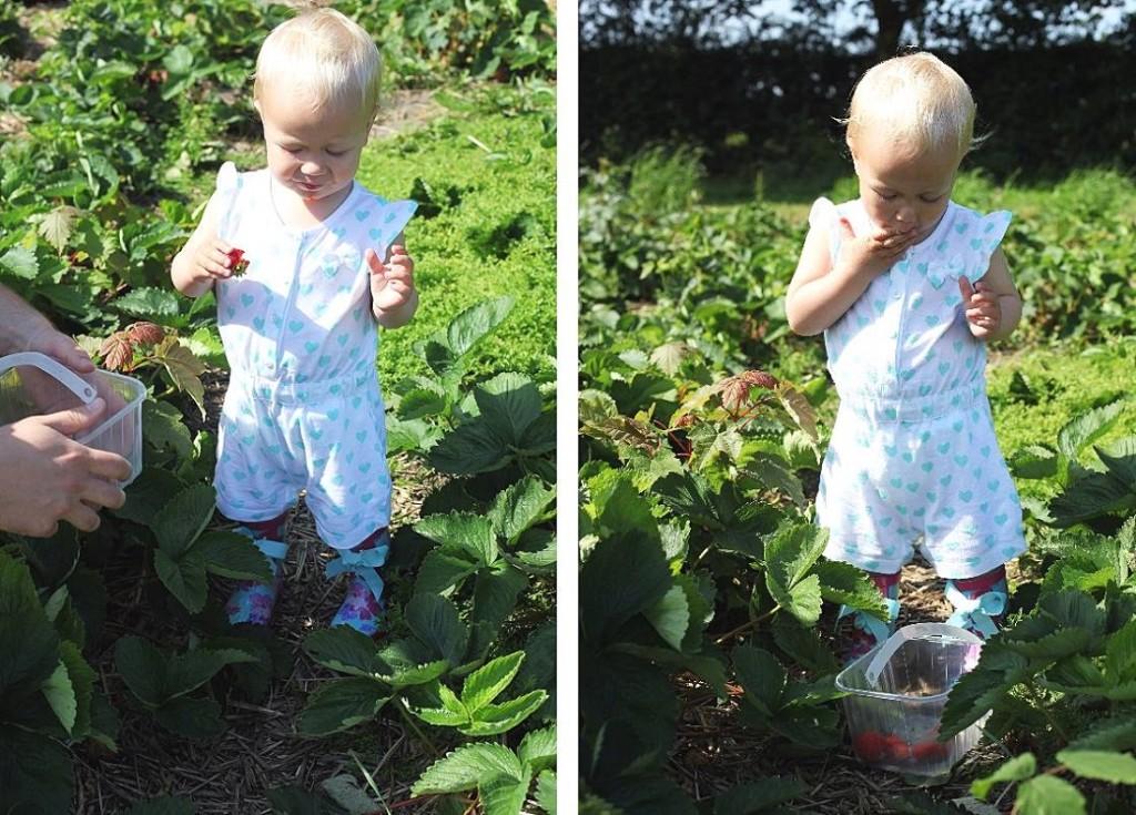 milla wcina truskawki
